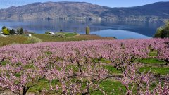 Spring Over Okanagan Lake